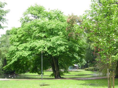 Wilhelminapark (Tilburg)